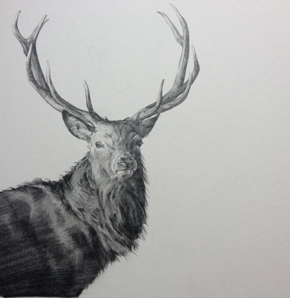 How-to-paint-and-awesome-deer